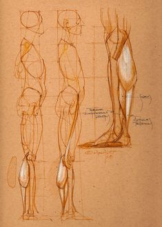 Drawing The Human Figure - Tips For Beginners - Drawing On Demand Human Anatomy Drawing, Human Figure Drawing, Figure Sketching, Figure Drawing Reference, Body Drawing, Anatomy Art, Anatomy Reference, Life Drawing, Drawing Faces