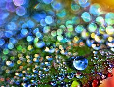 Abstract water droplets on leaf. Eye catching Example of Beautiful Dew Photography (Part.2)