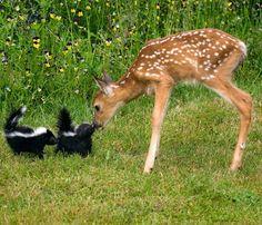 ...oh deer...