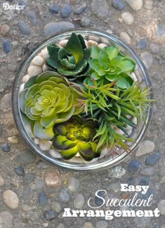 Faux Succulent-Arrangement - because I don't have a green thumb and these look real!