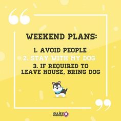 This is our weekend sorted! This is our weekend sorted! Avoid People, Pet Boutique, Weekend Plans, If I Stay, Sunday Funday, Motto, Dublin, Chill, Ireland