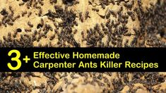 3+ Effective Homemade Carpenter Ants Killer Recipes Kill Carpenter Ants, Natural Insecticide, Natural Pesticides, Ant Remedies, Ant Killer Recipe, Bug Spray Recipe, Ant Problem, Mosquito Protection