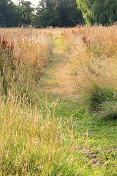 Gedurende de groei van het lange gras worden er systematisch paden gemaaid zodat het romantische zitplekje onder de treurwilg goed bereikbaar blijft.