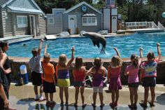 Oceans of Fun :: Come join the fun in the only marine mammal camp in the Midwest!  Oceans of Fun offers a variety of camps for ages 7-12.
