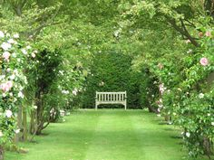 My favourite place to read, in peace. A neighbour's garden, away from the hurly burly of the green by my house.