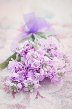 Pretty Bouquet, Tied Ꮗ/Sheer Ribbon~❥
