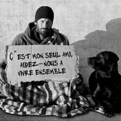 sans abri chien