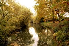 River Dommel in Sint-Oedenrode by autumn, (fall for you yanks) Fall For You, Autumn Fall, Country Roads, River, Spaces, Pictures, Photos, Rivers, Grimm