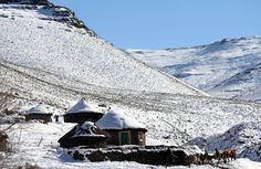 Cattle are seen near snow covered houses at Makopanong village in eastern Lesotho on July 31, 2011. Winter temperatures in the southern African mountain kingdom often fall below freezing, sometimes with heavy snowfall. (Reuters/Matthew Tostevin)