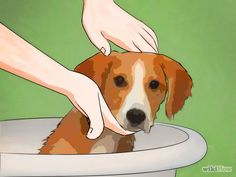 Get Rid of Fleas Naturally Step 5 Version 3.jpg