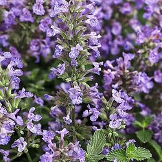 Grow These Sun-Loving Perennials That Shine Year After Year Full Sun Flowers, Shade Flowers, Orange Flowers, Shade Garden, Garden Plants, Potted Garden, Sun Garden, Garden Bed, Cranesbill Geranium