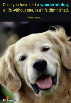 For Your Dog You Are His Whole Life 4knines
