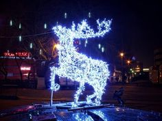 fot. Sebastian Nikiel #reindeer #lights