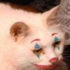 Meme Faces Discover Cat Memes Only murallamuerta Cute Cats, Funny Cats, Funny Animals, Cute Animals, Cat Memes, Dankest Memes, Funny Memes, Meme Meme, Animal Jokes