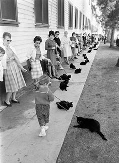 Magical Moments Captured With A Camera Black cat auditions in Hollywood, 1961 - priceless!Black cat auditions in Hollywood, 1961 - priceless! Crazy Cat Lady, Crazy Cats, I Love Cats, Cute Cats, Art Zen, Grand Chat, Foto Poster, Image Chat, Here Kitty Kitty