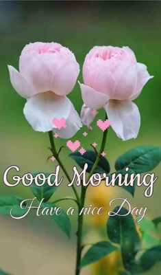 Latest Good Morning Images, Good Morning Beautiful Flowers, Good Morning Roses, Good Morning Image Quotes, Good Morning Cards, Good Morning Beautiful Images, Happy Morning, Good Morning Gif, Good Morning Picture
