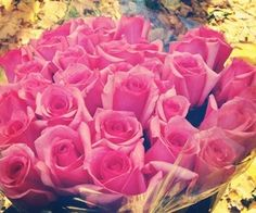Roses de jessi_babe pe We Heart It