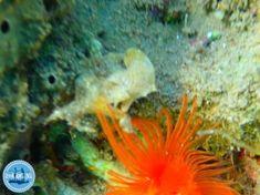 Excursies op Kreta dagelijkse nieuwe informatie over Kreta wandelexcursies op Kreta Tours, Pets, Animals, Animales, Animaux, Animal, Animais, Animals And Pets