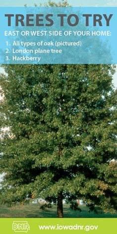 #Fall is a great time to plant a #tree!
