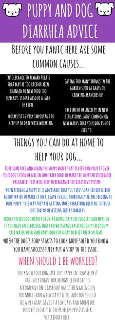 Help with dirarreah in puppies and dogs. Sound advice!
