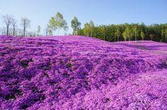 20 Superb Hokkaido Views | tsunagu Japan