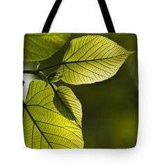 """Shades Of Green Tote Bag by Christina Rollo (18"""" x 18"""").  The tote bag is machine washable, available in three different sizes, and includes a black strap for easy carrying on your shoulder.  All totes are available for worldwide shipping and include a money-back guarantee."""