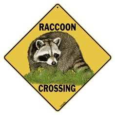 """Raccoon Crossing sign, measures 12"""" by 12"""". Features rounded corners and a hole at the top for easy hanging."""