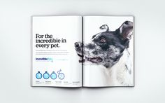 Sightbox Product Design Studio: A design agency by founders for founders Pet Store, Design Agency, Magazine Design, Sacramento, Digital Marketing, Advertising, Behance, Branding, The Incredibles
