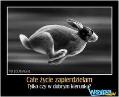 Racing Rabbit with goggles; go Rabbit go ! Rabbit Run, Bunny Rabbit, Rabbit Farm, Silly Rabbit, Rabbit Hole, Maka, I Got Your Back, Tier Fotos, Photo Manipulation