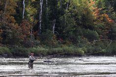 Fall salmon fishing in New Brunswick, Canada