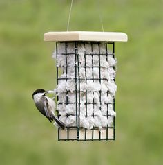 This is what I can do with the suet feeders in spring/summer. good idea