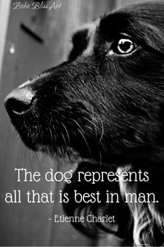Etienne Charlet Quote: The dog represents all that is best in man. Dog Lover Gifts, Dog Gifts, Dog Lovers, Pet Quotes Dog, Animal Quotes, Reflection Quotes, Best Pet Insurance, Life Insurance, Dog Potty