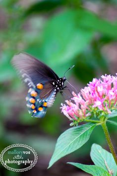 Butterfly, summer, nature photography