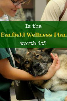 Is The Banfield Wellness Plan Worth It Wellness Plan How To Plan Wellness