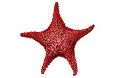 West Bahamian Starfish, Red