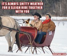 its always lovely weather for a sleigh ride together with you, angry cat, dumpaday
