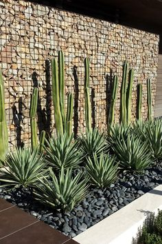 This gabion wall was installed in the back of the garden to help prevent erosion in the dry climate. The cacti and the yucca plants give the wall a pop of color, while the grey stones in the flower beds add an elegant touch to this desert landscape. #DesertLandscape