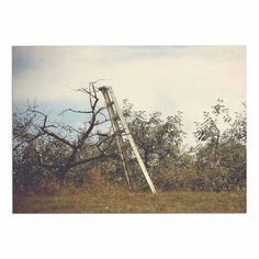 KESS InHouse Angie Turner 'Apple Picking' Green Photography Dog Place Mat, 13' x 18' ** Additional details at the pin image, click it  (This is an amazon affiliate link. I may earn commission from it)