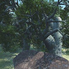 Oak Trees Behind A Large Stone