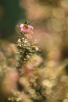 Erica by Gatoon Ratchanee on 500px