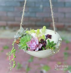 Hanging seashell planter