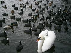 großes Geflügeltreffen............ :) http://fc-foto.de/30121291