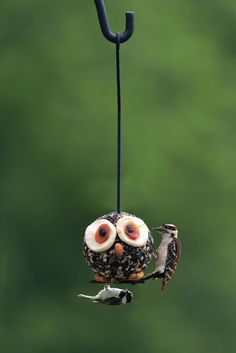 Edible owl bird feeder ~ for purchase (DIY - suet ball, apple slices, dried apricots, raisins, almonds? Make A Bird Feeder, Bird Feeder Plans, Bird House Feeder, Bird Feeders, Bird Suet, Owl Bird, Pet Birds, Plants To Attract Hummingbirds, Bird House Kits