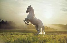 """Search Results for """"horse wallpaper for ipad mini"""" – Adorable Wallpapers All The Pretty Horses, Beautiful Horses, Animals Beautiful, Horse Wallpaper, Animal Wallpaper, Girl Wallpaper, Cavalo Wallpaper, Animals And Pets, Cute Animals"""