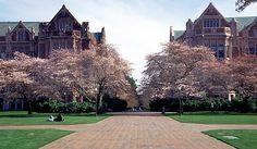 University of Washington (Seattle, Washington, USA) main campus with Japanese Cherry Trees in bloom