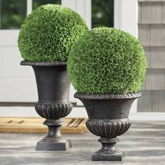 Fill outdoor planters with colorful blooms to transform your backyard or patio. Find large planters, urn planters, window boxes and more at Grandin Road. Topiary Plants, Urn Planters, Topiary Trees, Boxwood Garden, Boxwood Topiary, Porch Urns, Front Porch Plants, Front Yard Decor, Ideas Para El Patio Frontal