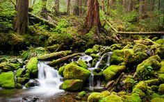 лес, деревья, ручей, речка, камни, мох