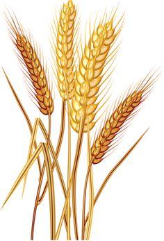 image du blog loveferrari centerblog net rh pinterest com grain carting grain cart for sale uk
