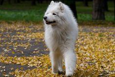 11 Top Medium Sized Dogs