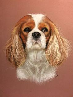 Dessin animalier : portrait de Gams, cavalier king charles, réalisé au pastel